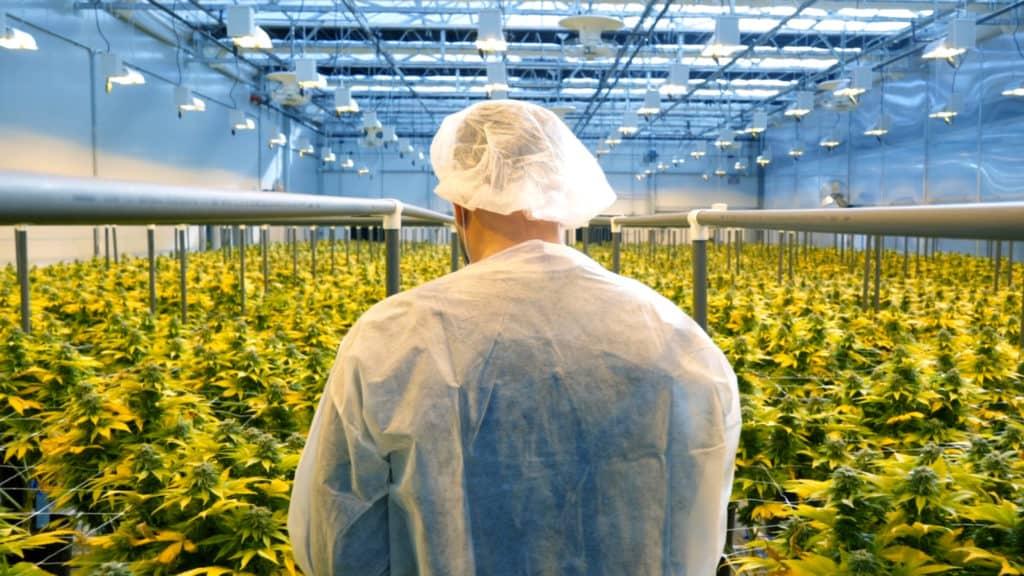 Solaris Farms & Tech-Driven  Growing