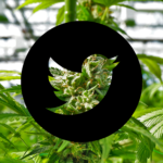 Social Media's War on Marijuana