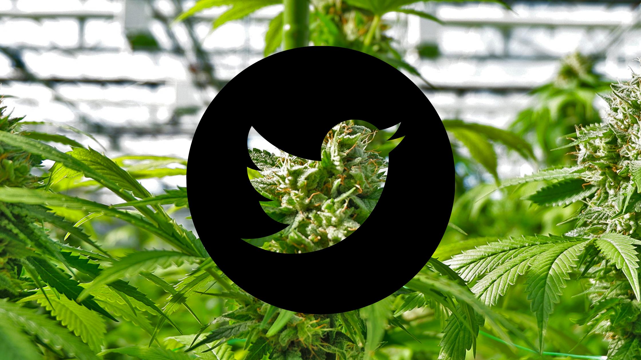 Social Media's War on Marijuana